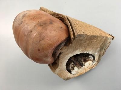 keramiek peul op hout
